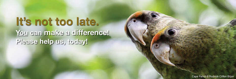 Save Africa's Parrots | World Parrot Trust