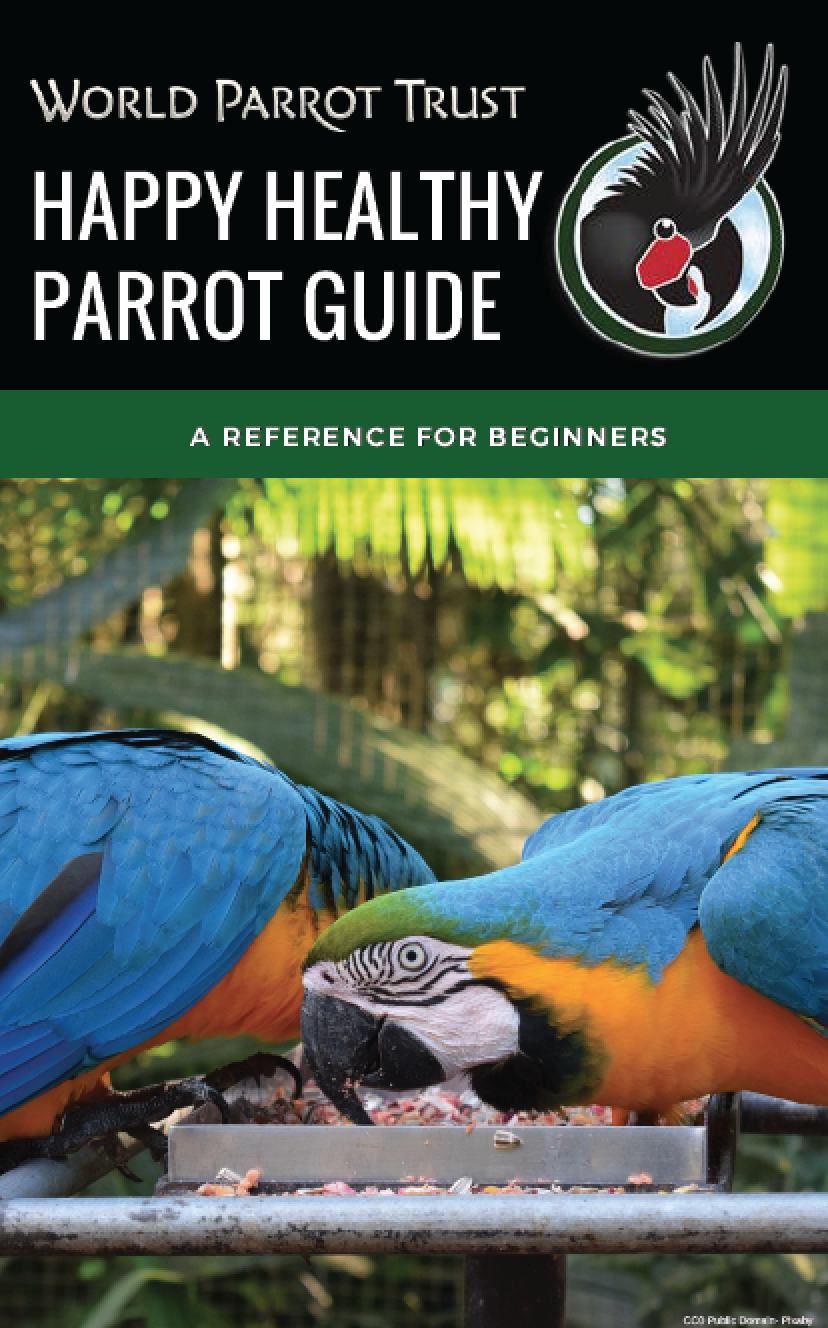 Happy Healthy Parrot Guide for Beginners