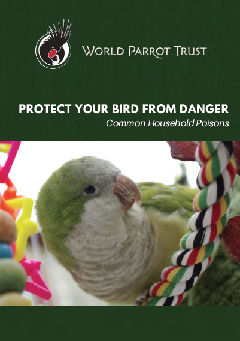 Common Bird Parrot Poisons List