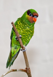 Click photo to visit gallery