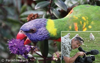 Mimicking Wild Diets for Companion Parrots
