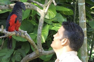 Parrot Conservation - Indonesia