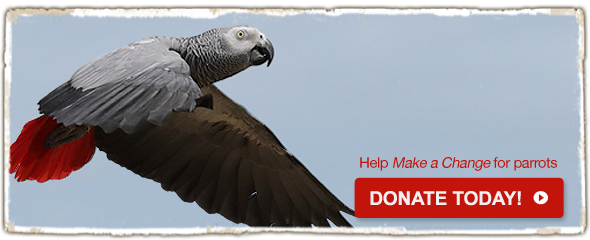Make a Change for parrots