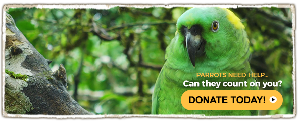 PARROTS NEED HELP… Can they count on you?