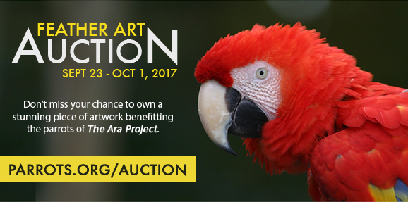 Feather Art Auction