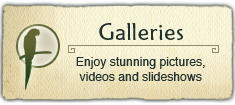 Image and Video Galleries