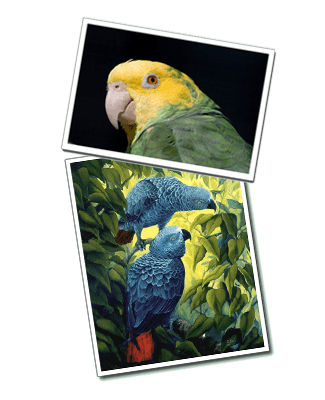 Parrot art, prints and posters