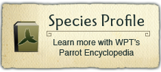 Parrot Encyclopedia - Species Profile