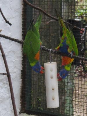 ENRICHMENT | World Parrot Trust
