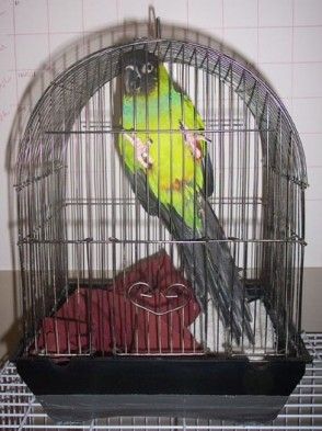 Image result for bird in tiny cage