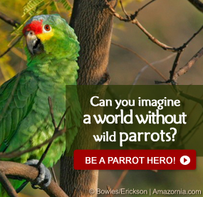 Be a Parrot Hero