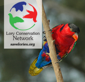 Lory Conservation Network