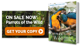 Parrots of the Wild - GET YOUR COPY