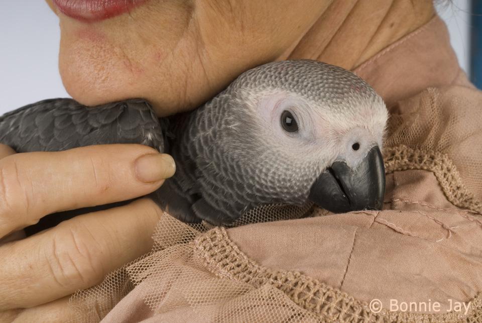 Position Releasing Pet Birds World Parrot Trust