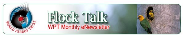 Flock Talk, World Parrot Trust eNewsletter