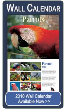 2010 Parrots Wall Calendar