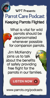 Parrot Podcasts