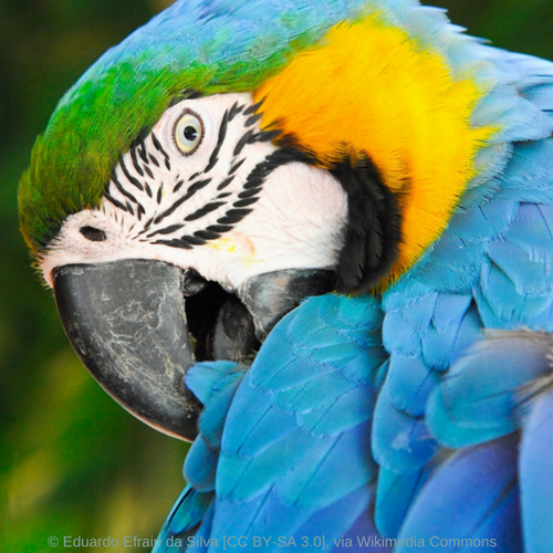 Macaw Parrot Resources – World Parrot Trust WP
