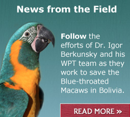 Read the latest on the Blue-throated Macaw project