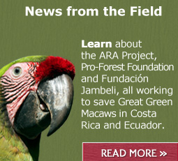 Read the latest on the Great Green Macaw project