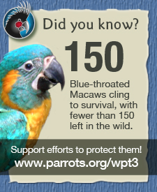 Support the efforts to save the parrots!